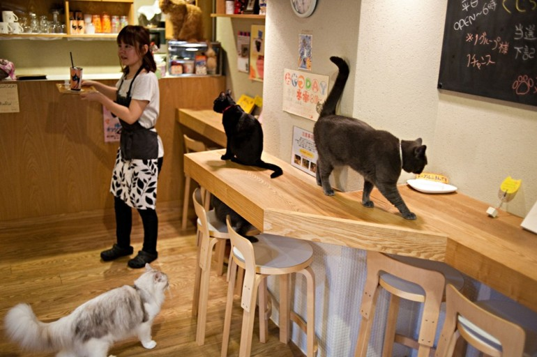 In Pictures: Killing time in Japan cat cafés | Gallery | Al Jazeera
