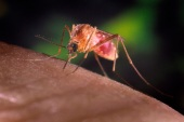 Malaria infects millions of people every year and kills more than 400,000 [Reuters]