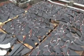 Shark fin banned at Hong Kong functions
