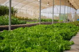 Aquaponics is considered a boon for sustainability but its high cost is problematic [Leyland Cecco/Al Jazeera]