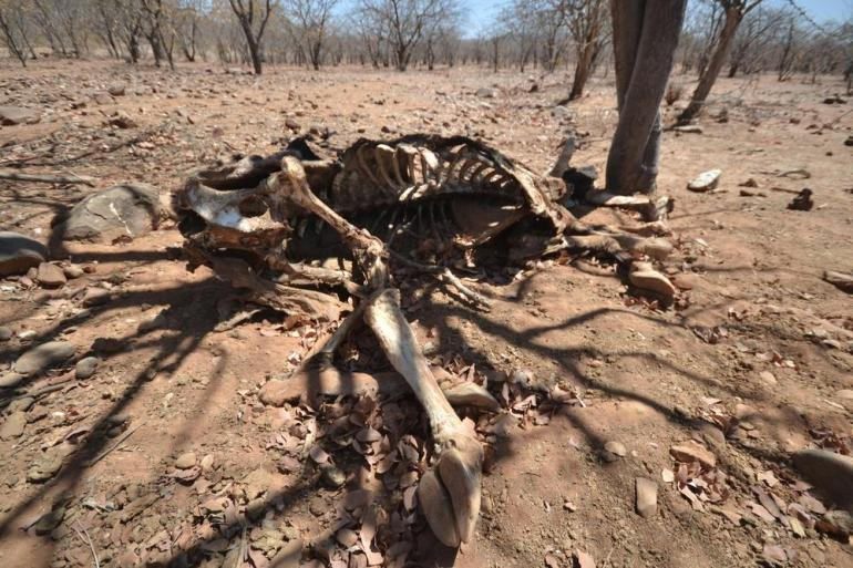Severe drought in Namibia has devastated the country threatening the survival of people and animals.