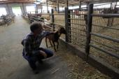 The EU has banned animal products coming out of illegal Israeli settlements in Palestine [Reuters]