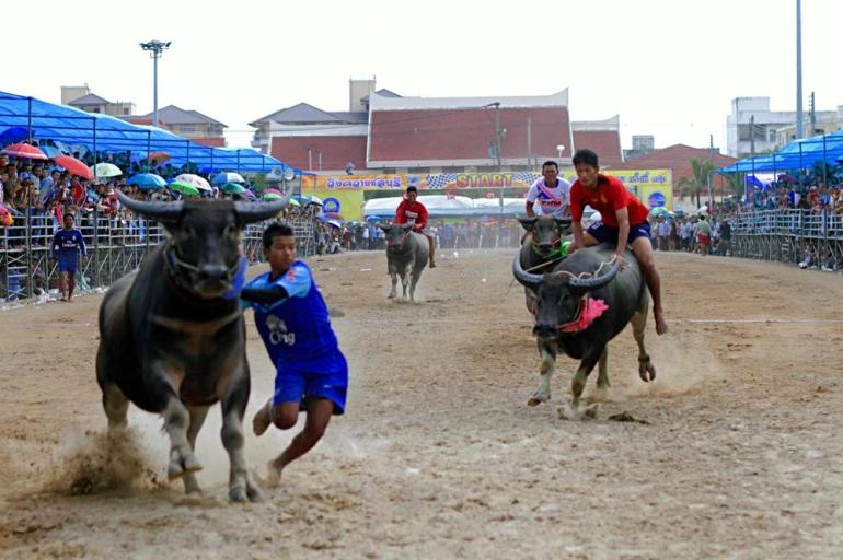 Thai riders must jump off their buffaloes in order to stop them.