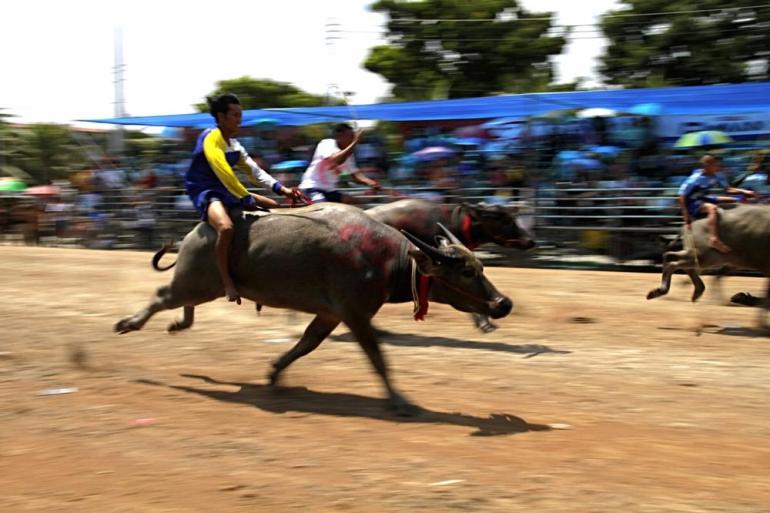 The races have taken place in Chonburi province for more than 140 years.