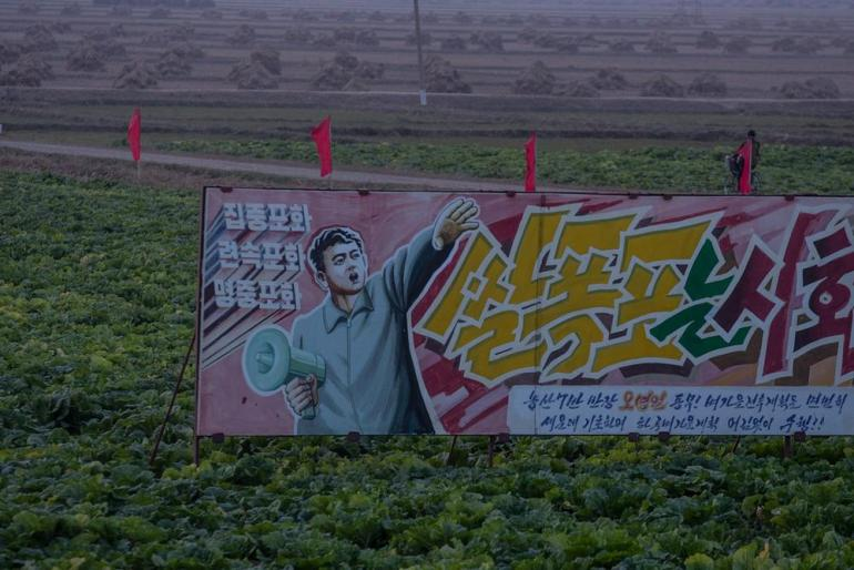 A propaganda poster seen in the middle of a cabbage field.