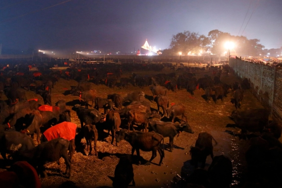 An estimated 300,000 animals had their heads chopped off or throats slit during the 2009 festival [Reuters]
