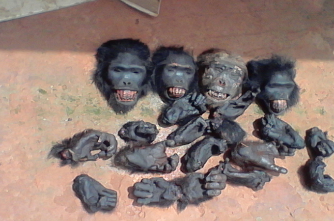 Trafficking great ape body parts in Cameroon | Cameroon News | Al Jazeera