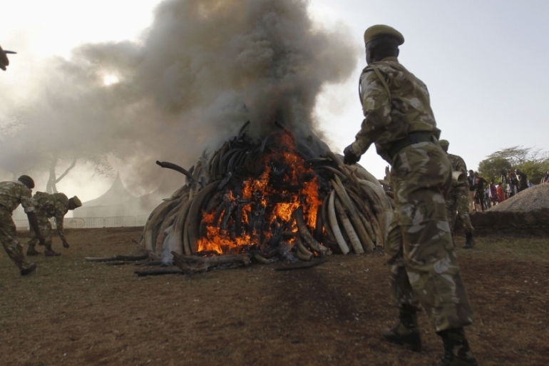 Kenya Wildlife Service rangers burn 15 tonnes of ivory confiscated from smugglers and poachers [REUTERS]