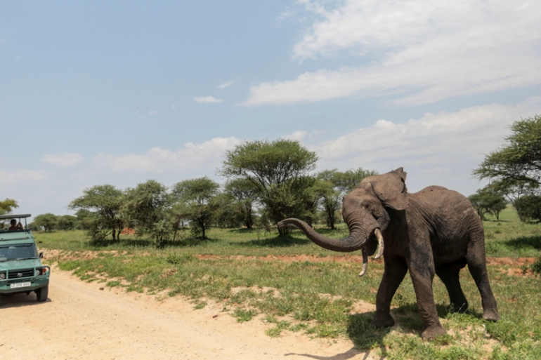 Leaked statistics have shown that Tanzania has lost up to 60 percent of its elephants to poaching in one area alone [AP]