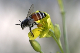 Environmental activists warn that the rapid fall in bee numbers could take a catastrophic toll on food production worldwide [EPA]
