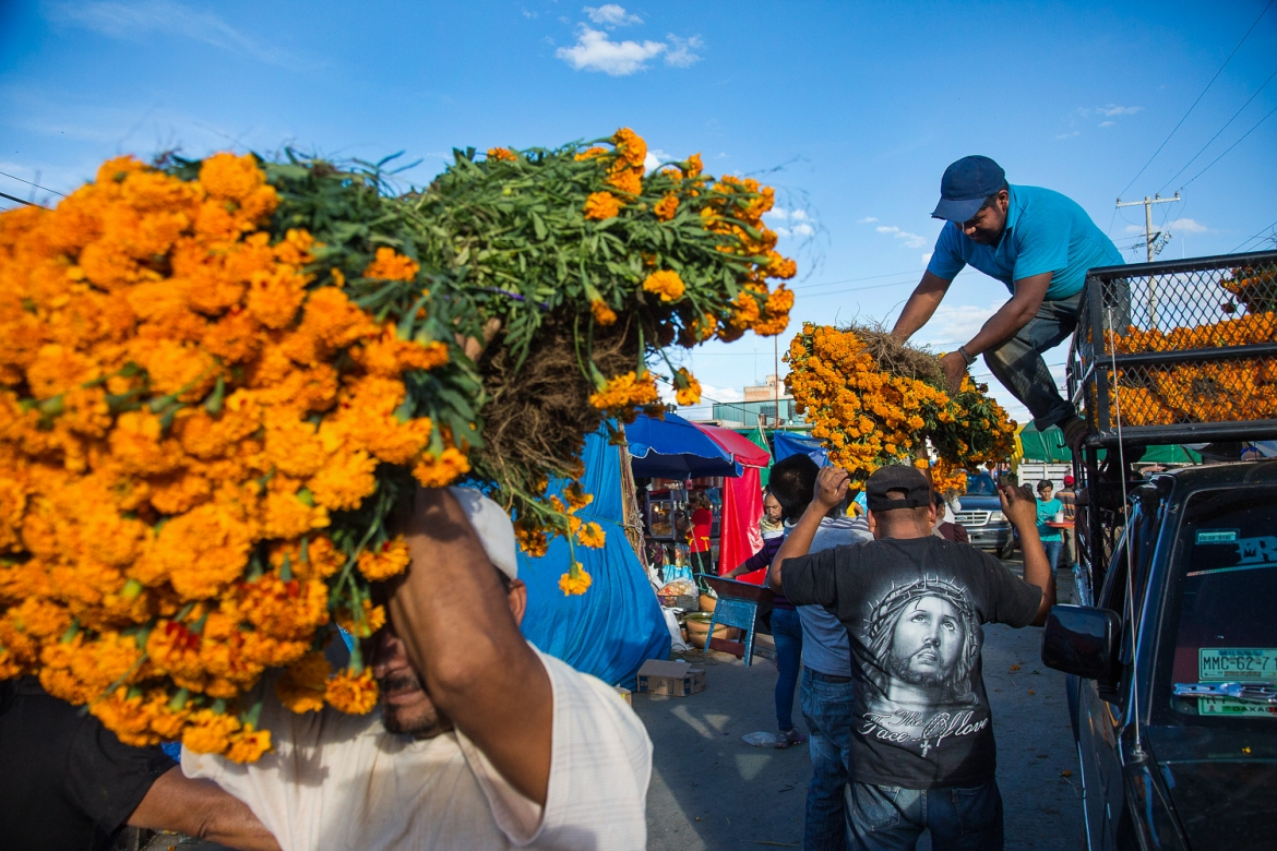 Bundles of marigolds at one of the Day of the Dead markets. Not native to Oaxaca, these flowers, which are placed on graves and at alters, are shipped in from as far as Juarez, a thousand miles north. [Gabbi Campos/Al Jazeera]