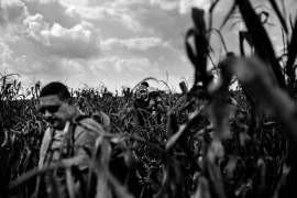 A refugee from Iraq walks through a cornfield, avoiding police after crossing the border between Serbia and Hungary near Roszke, Hungary. [Manu Brabo/MeMo]