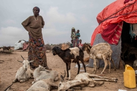 The drought has killed off herds of cattle, sheep, goats and camel and displaced thousands within the territory [Ashley Hamer/Al Jazeera]