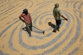 Small-holder farmers constitute 80 percent of the food insecure, although they produce around 70 percent of the food that the world consumes, writes Elver [Reuters]