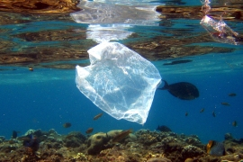 Kenya bans plastic bags, may fine violators $38,000