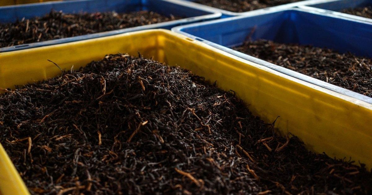 Organic food revolution in Sri Lanka threatens its tea industry thumbnail