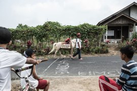 Forty-two-year-old Sururi, a caretaker of horses from Serang village in Purbalingga, Central Java, Indonesia, started the mobile library called Kudapustaka, or 'Horse Library'. [Putu Sayoga/Al Jazeera]