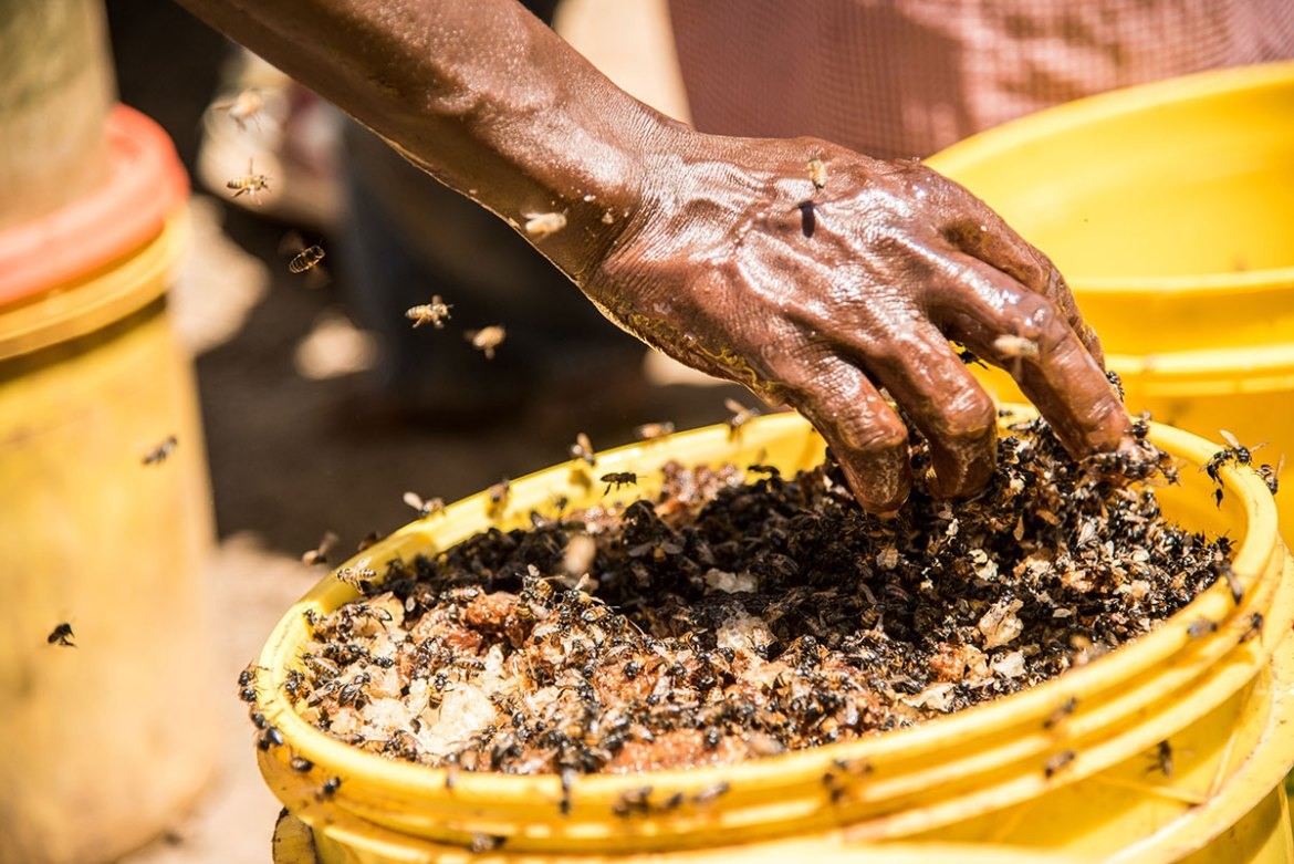 Marigat is a fast-growing town lying in Baringo County, in Kenya's Rift Valley. This area is home to the Tugen, Njemps and Pokot communities, famous for their honey. [Berta Tilmantaite/Transterra Media/Al Jazeera]