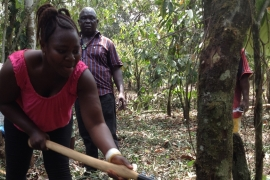 Mary Sia Kombo cuts down an old tree to make more room for new cocoa seeds to be planted [Nina Devries/Al Jazeera]