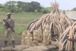 Conservationists say that elephants can be protected only if all the countries involved work together [Al Jazeera]