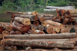 At least 50 activists, fighting against illegal logging in Brazil, were killed [Reuters]