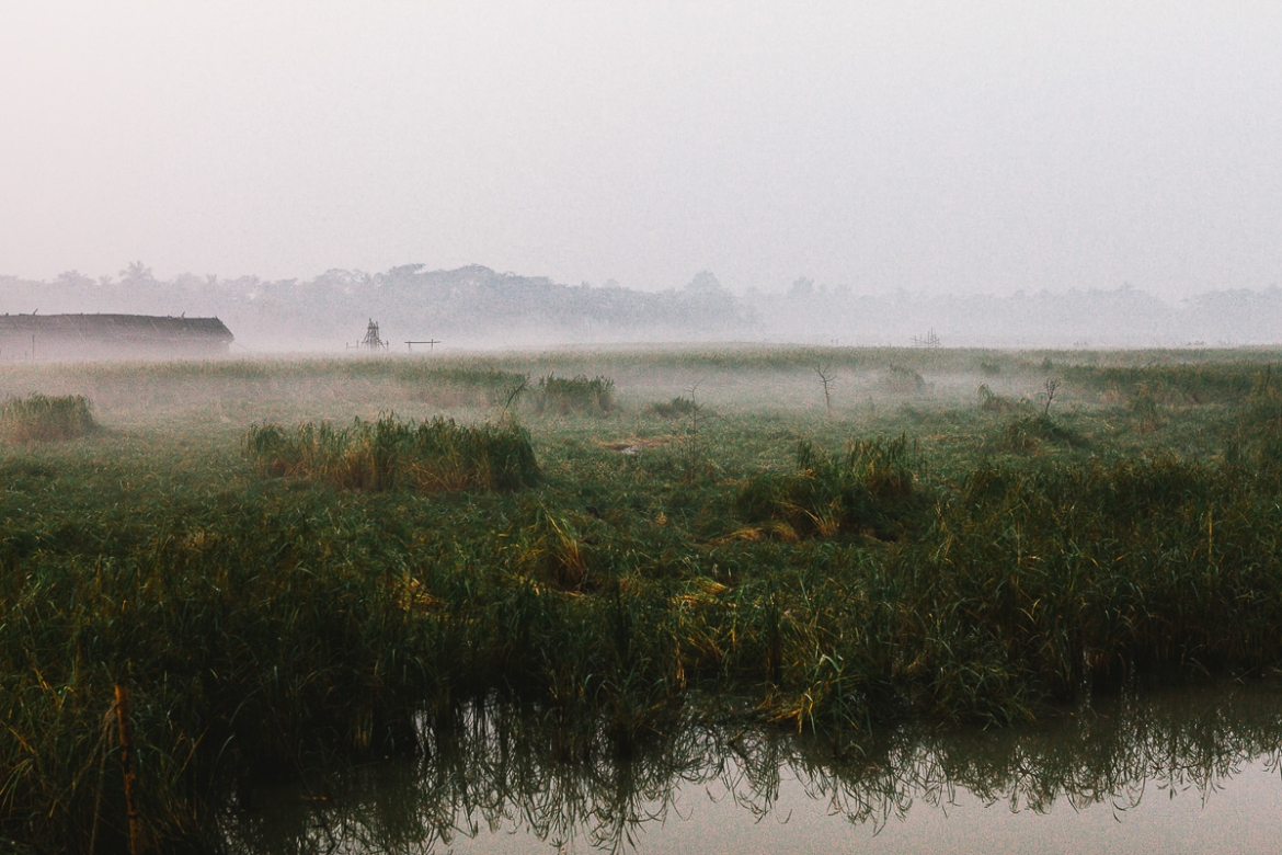 Early morning in the rice fields outside of Mongla. With the increasing salinity in the water, growing rice is becoming more difficult. [Karim Mostafa/Al Jazeera]