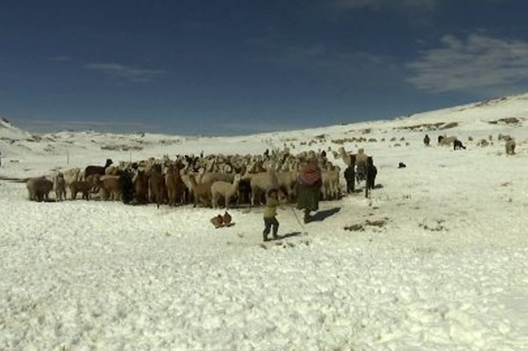 Heavy snowfall and bone-chilling temperatures have taken their toll on the farming community in Peru's Andes [AP]