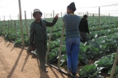 Recognising the importance of affordable access to water for agricultural success is important in Botswana, write Moseley and Fehr [William Moseley / Al Jazeera]