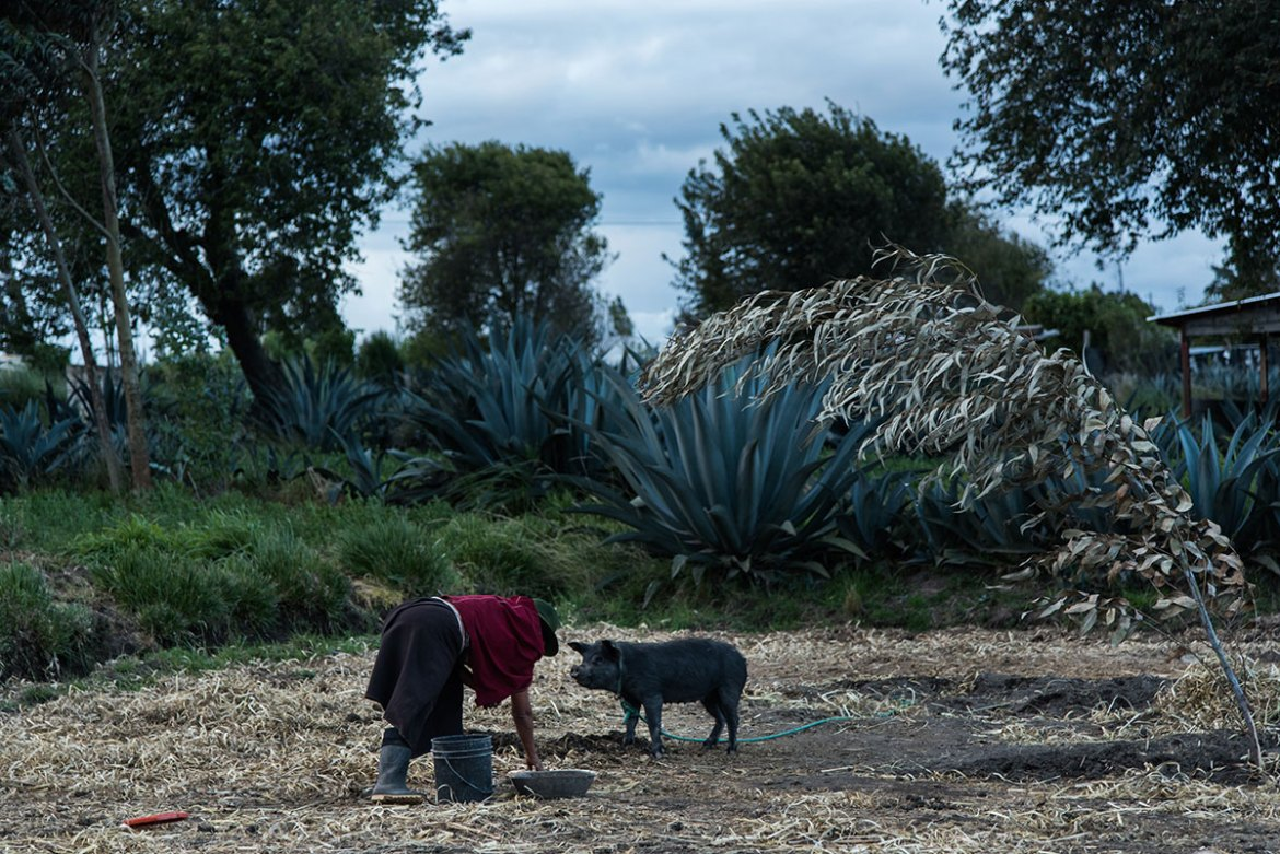 Plots of land are separated by lines of agave plants rather than fences. [Berta Tilmantaite/Al Jazeera]