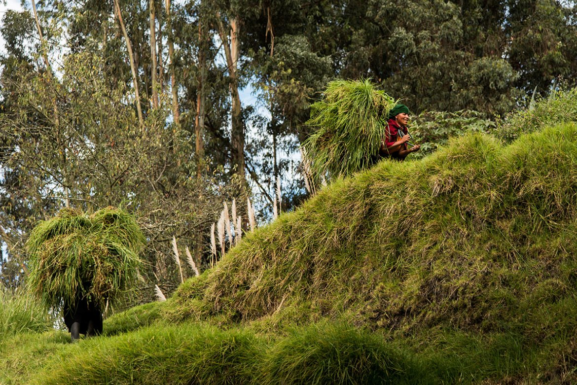 With 30-45 kilo bundles of grass on their back, women look like enormous walking bushes. The sisters move slowly, swaying from side to side, stopping to rest their backs and knees. They tread carefully and grab on to trees that sometimes serve as support, and at other times become obstacles. [Berta Tilmantaite/Al Jazeera]