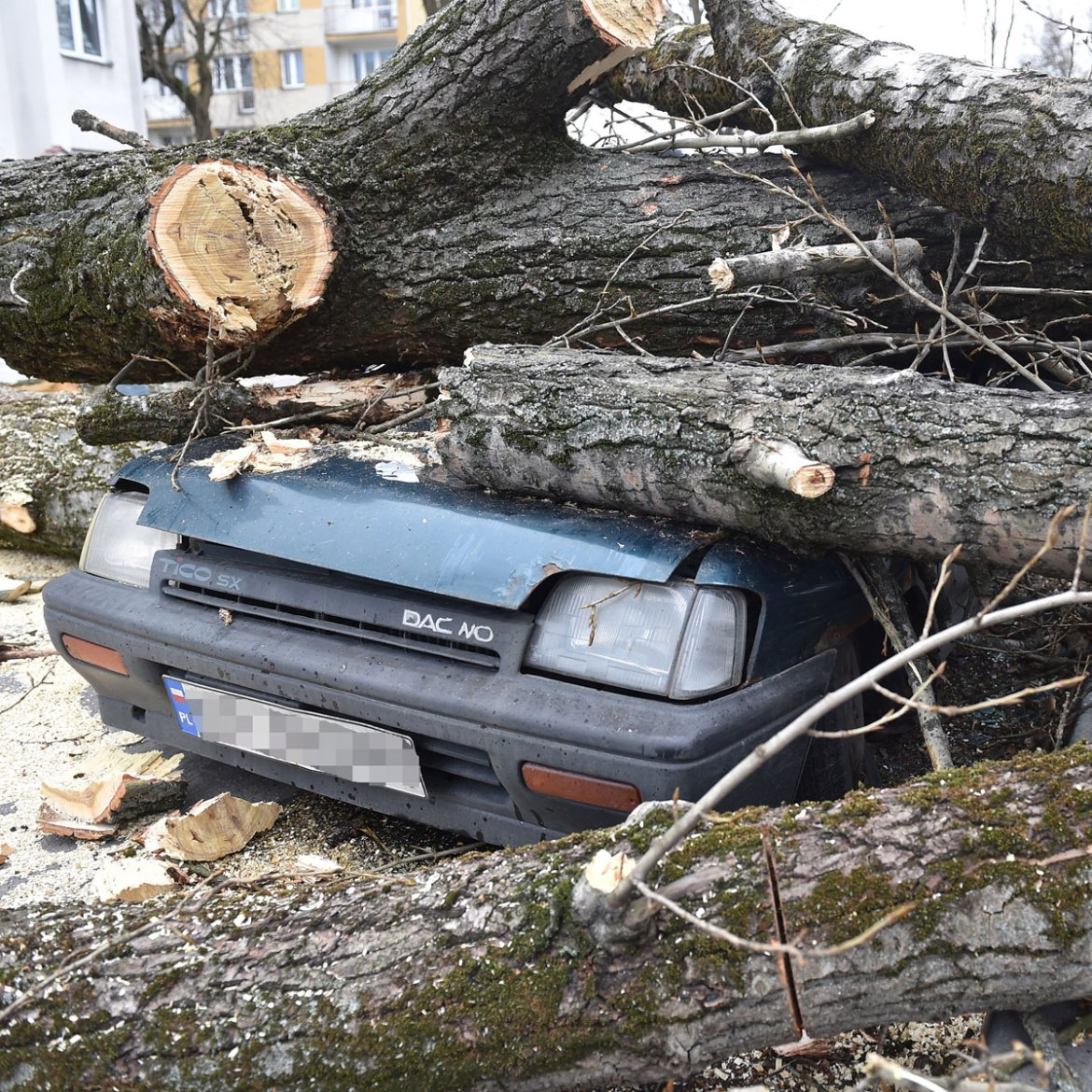 A car destroyed by a fallen tree in Krakow, Poland, as Storm Doris continues her destructive path through northern Europe. [Jacek Bednarcyk/EPA]
