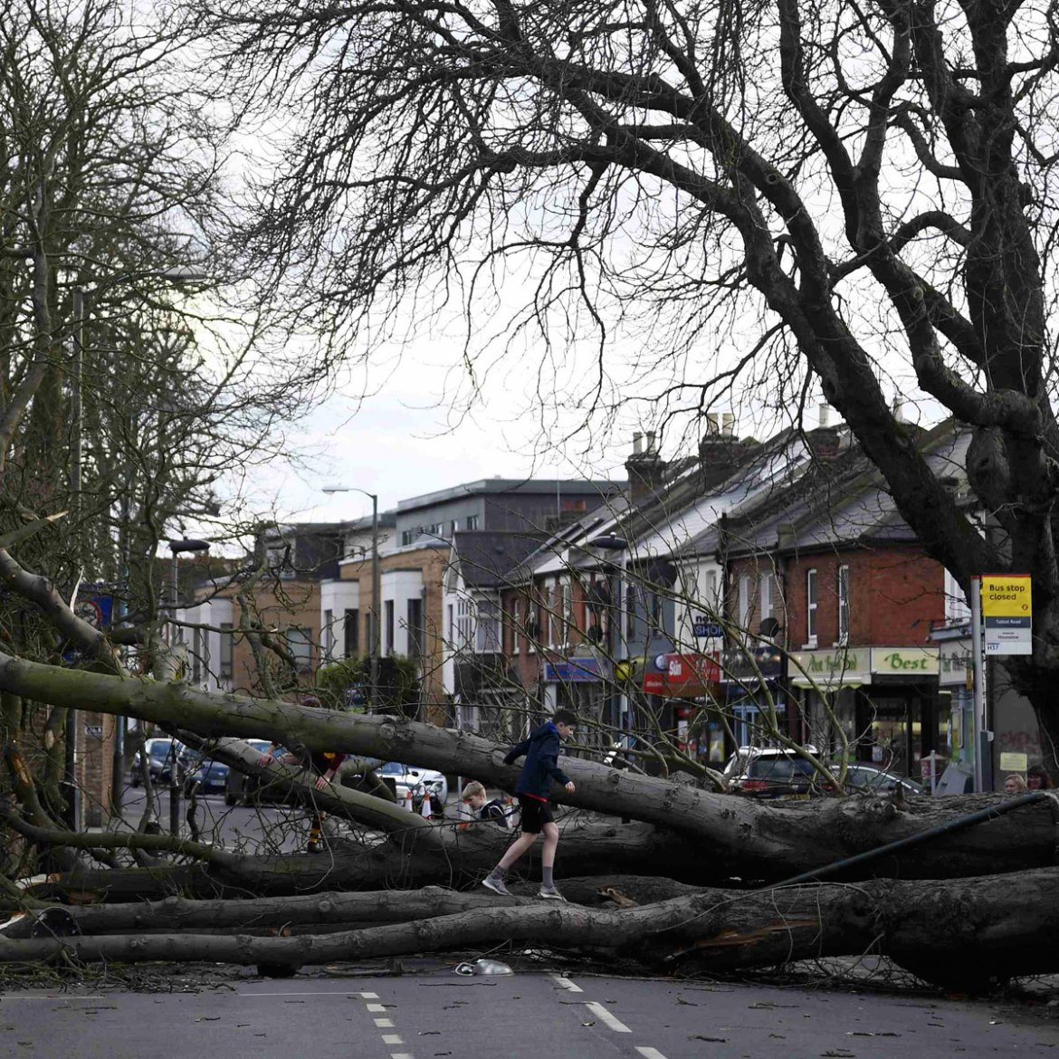 Storm Doris raged through England bringing down more than one mature tree. This one lies across a main road in Isleworth, London. [Toby Melville/REUTERS]