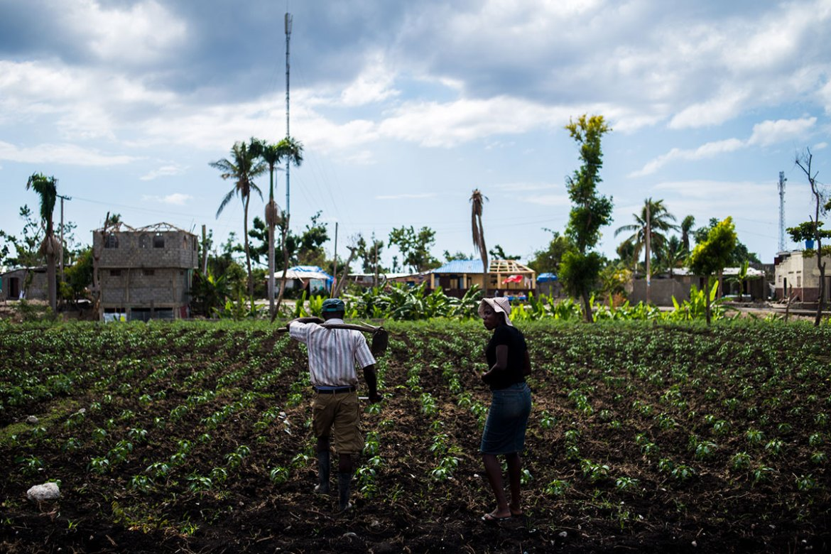 The first crops since the storm - the only economic output for most families - are only now beginning to mature in Les Anglais. [Alex McDougall/Al Jazeera]