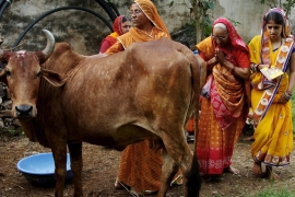 Cows are held sacred by the majority of the Hindus in India [Reuters/Himanshu Sharma]