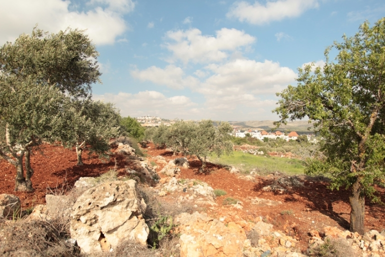 Shilo settlement sits on a hill behind the olive groves of Turmus Aya [Leila Molana-Allen/Al Jazeera]
