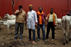 Members of a Hindu nationalist vigilante group established to protect cows are pictured with animals they claimed to have saved from slaughter in Agra, India [Cathal McNaughton/Reuters]
