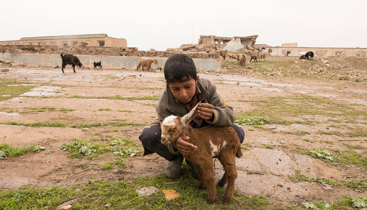 Ali is 12 years old and cares for his sheep and goats in a pasture on the outskirts of Hammam al-Alil. He has not been to school since ISIL first occupied Mosul over two years ago. He arrived at the town on March 10 with his family who are staying by the local mosque until it is safe for them to return home. [Melany Markham/NRC/Al Jazeera]