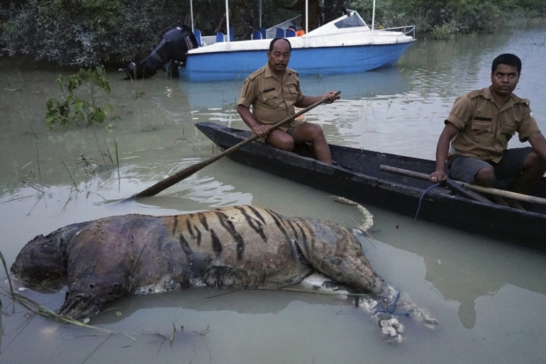 More than 200 carcasses, including that of a Royal Bengali tiger, were recovered in Kaziranga [Uttam Saikia/AP]