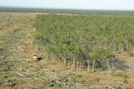 About 1.4 million hectares of forest has been cleared since 2010 on Australia's east coast [Courtesy: The Wilderness Society]
