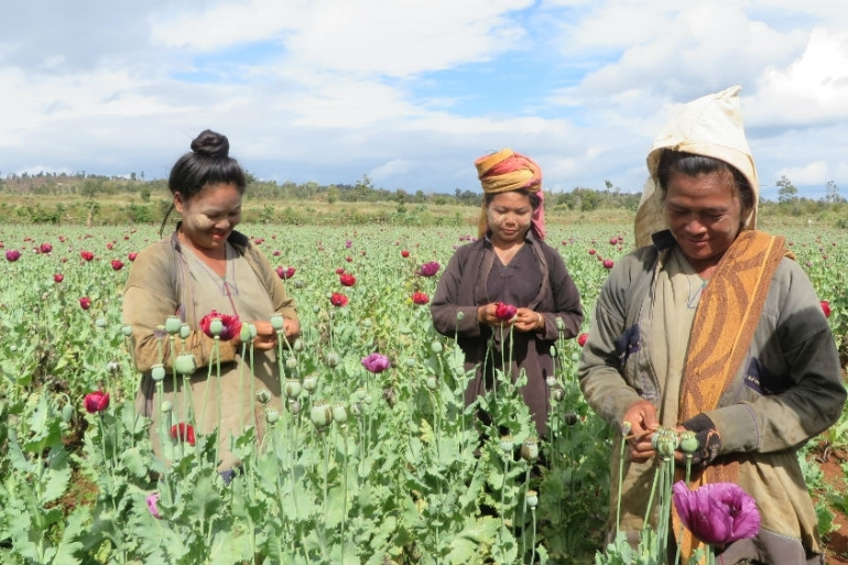 Women in an opium poppy field in South Shan, Myanmar [UNODC Regional Office for Southeast Asia and the Pacific/Al Jazeera]