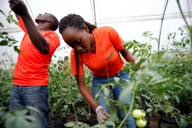 Do millennials hold the key to Africa's farming future?