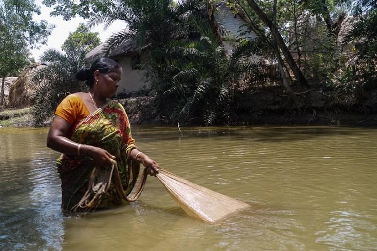 The Tiger Widows Of India Environment News Al Jazeera