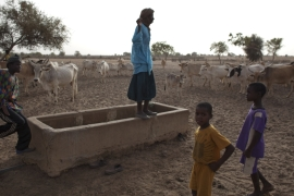 Competition between farmers and herders over scarce resources is one of the main sources of deadly conflict in West Africa [File: Rebecca Blackwell/AP]