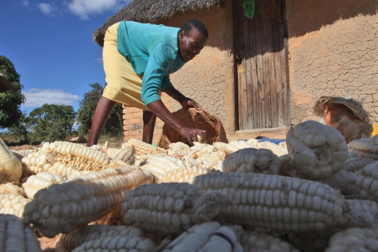 According to Zimbabwe Vulnerability Assessment Committee, urban food insecurity is now affecting 2.2 million people [Tsvangirayi Mukwazhi/AP]