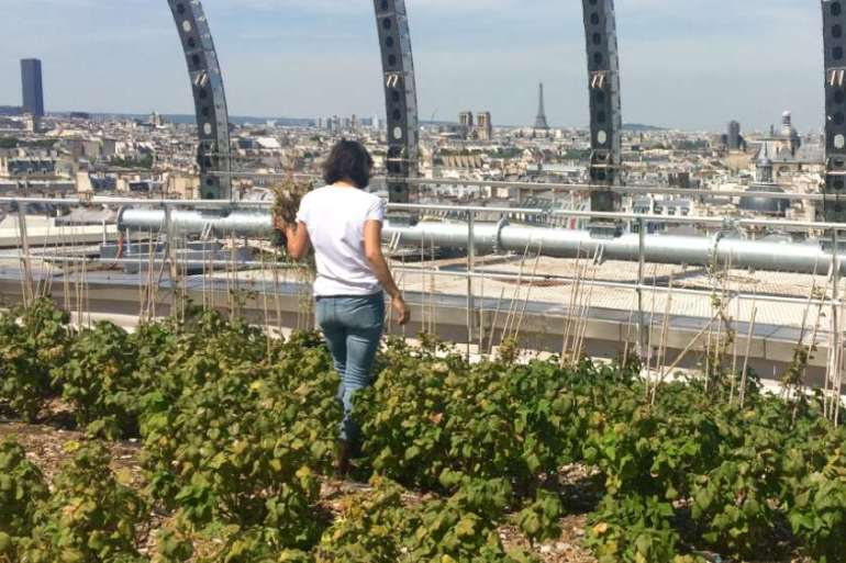 The rooftop farm on top of the Opera Bastille produces fruits and hops, tomatoes, cucumbers, salad leaves, edible flowers and more [Topager]
