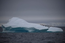 A group of chinstrap penguins walks on top of an iceberg floating near Lemaire Channel, Antarctica. [Ueslei Marcelino/Reuters]