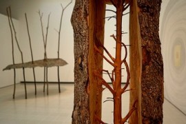 Trees on display: New exhibition showcases natural world