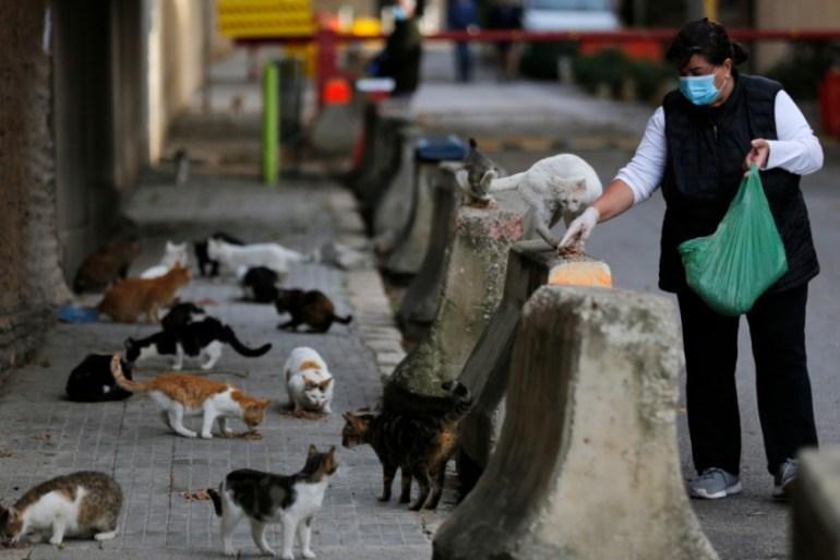 Cats Can Catch Coronavirus Study Finds Prompting Who Probe Us Canada Al Jazeera