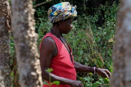 Adama Kabia forages for herbs needed to make her traditional medicine [Laurence Ivil/Al Jazeera]