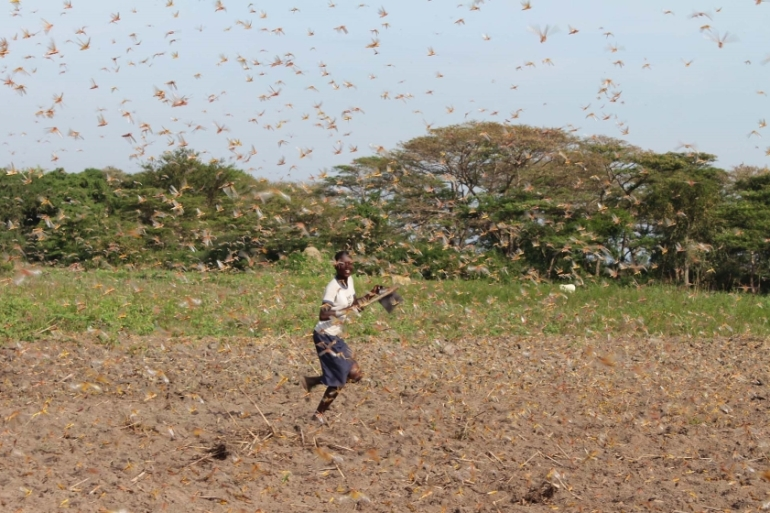 A child chasing away the locusts in Ongino sub-county in Kumi distrcit [Godfrey Ojore/Al Jazeera]